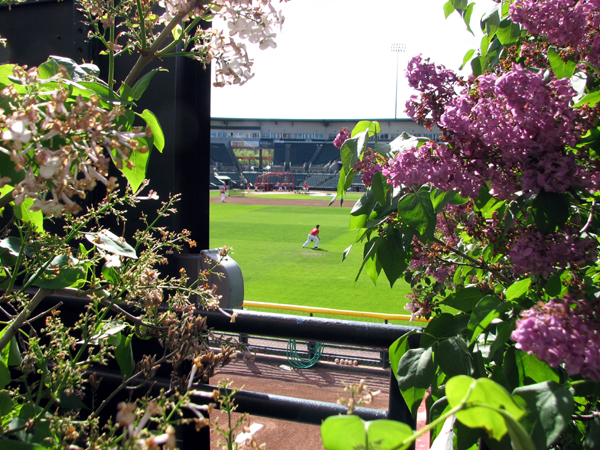 frontier-field-view-through-lilacs