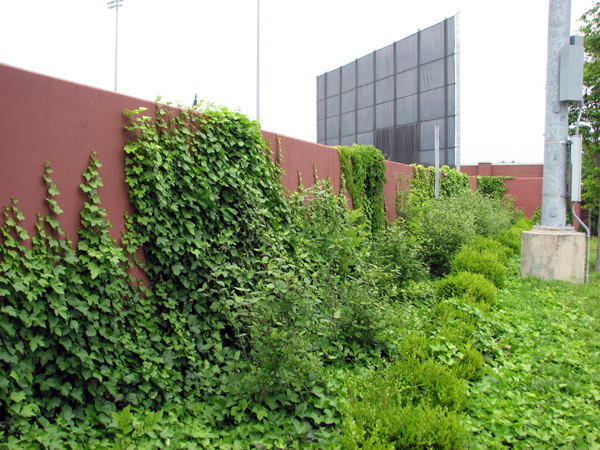 bowling-green-ballpark-fence-greenery