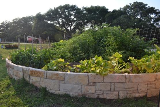 round-rock-express-veggie-garden