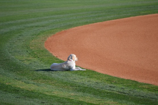 security-bank-ballpark-dog