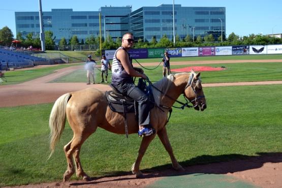 ottawa-champions-horse-2