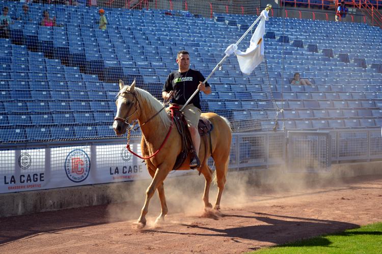 ottawa-champions-horse